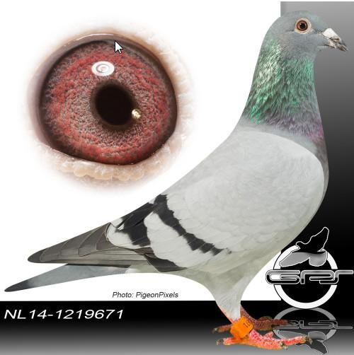 NL14-1419671